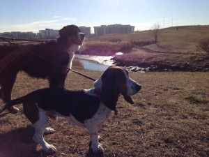 Seamus and friend along the banks of the Neponset River, Dorchester