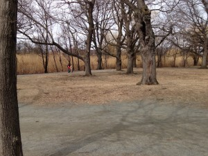 Back Bay Fens section of Emerald Necklace Park